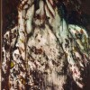 Ida Barbarigo Saturno, 1997 Olio su tela, cm 116 x 73